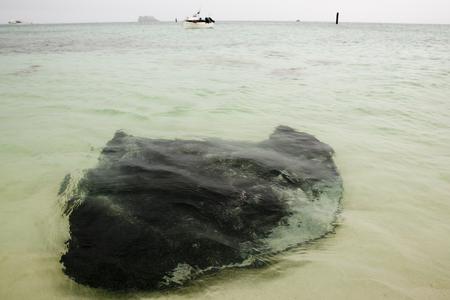 Stingray - Hamelin Bay - Western Australia 写真素材