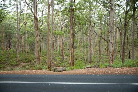 Boranup Forest - Margaret River - Australia Stockfoto