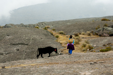 Cattle Herder in the Andes - Peru Stock Photo