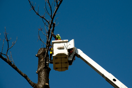 Tree Felling in Bucket Lift Editorial