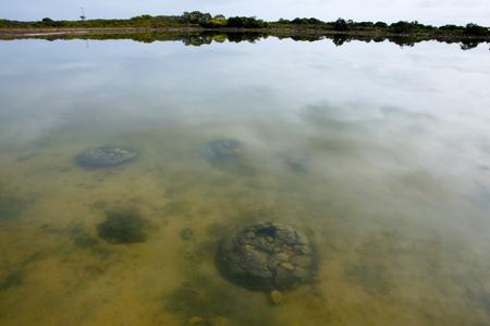 Lake Thetis Stromatolites - Western Australia Stock Photo