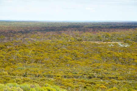 Great Western Woodlands - Australia