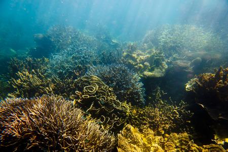 Ningaloo Reef - Coral Bay - Western Australia Banco de Imagens