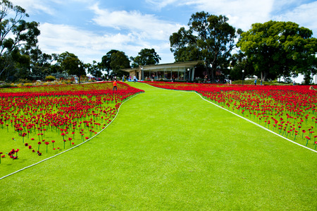 Artificial Poppies in Kings Park - Perth - Australia Editorial