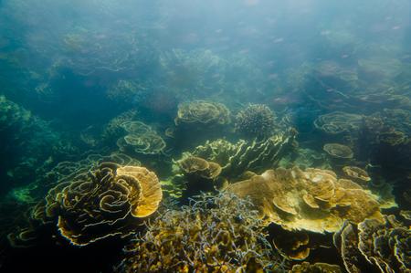Ningaloo Reef - Coral Bay - Western Australia Reklamní fotografie