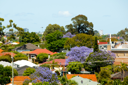 Jacaranda Trees Blooms - Perth - Australia 스톡 콘텐츠