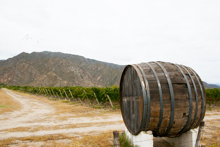 Vineyard - Cafayate - Argentina Imagens
