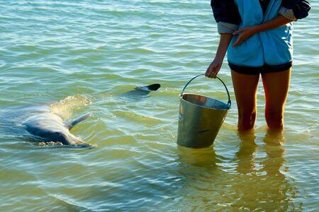 Wild Dolphin - Monkey Mia - Australia