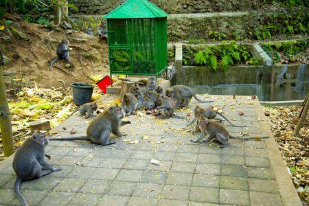Ubud Monkey Forest - Bali - Indonesia