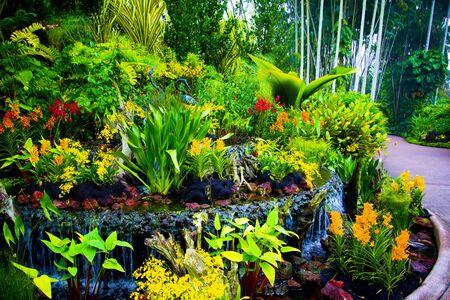 Jardin national des orchidées - Singapour