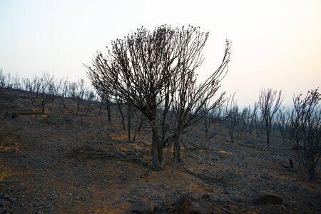 Bush Fire Devastation in Australia Stock Photo