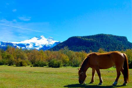 Gaucho Horse in Pasture - Argentina