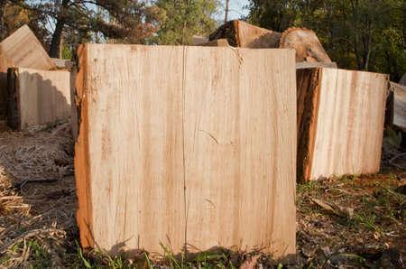 biomasa: madera cortada. La biomasa.