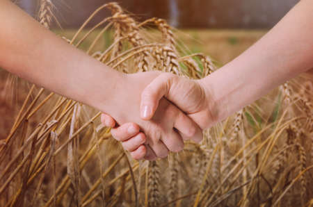cultivating: Farmers handshake over the wheat crop. Stock Photo