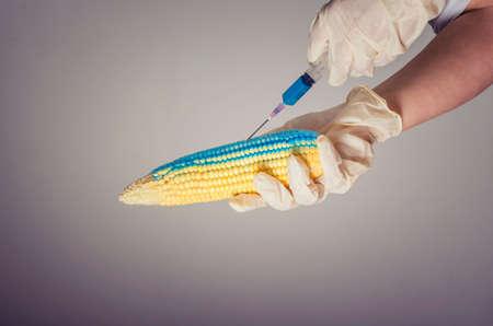 Maïs in genetisch laboratorium, GMO-voedselconcept. Stockfoto