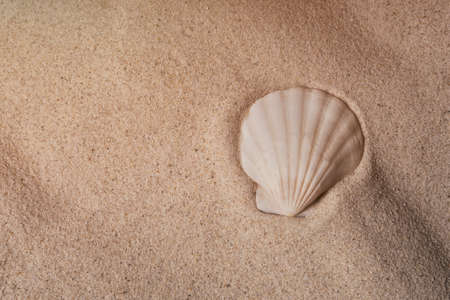 Seashell on sand, top view. Sea summer vacation background with copy space.