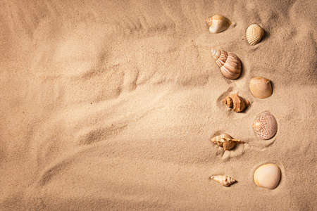 Seashells on sand, top view. Sea summer vacation background with copy space. Reklamní fotografie