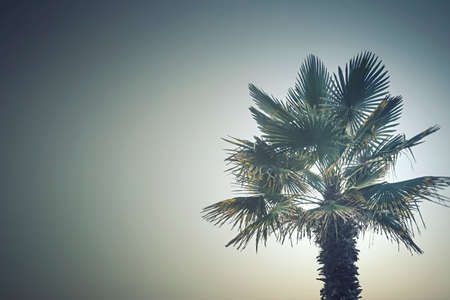 Palm tree on the beautiful sunset background Reklamní fotografie