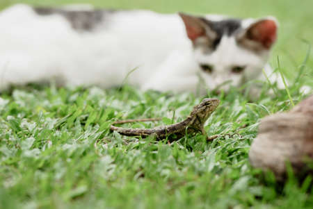 stray: Cat playing with lizard Stock Photo