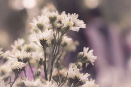 White tiny flowers in vintage filter stock photo picture and stock photo white tiny flowers in vintage filter mightylinksfo