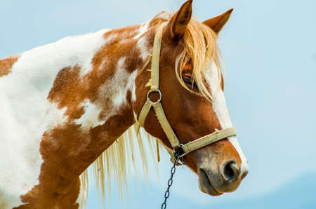 synchronously: horse at thailand Stock Photo