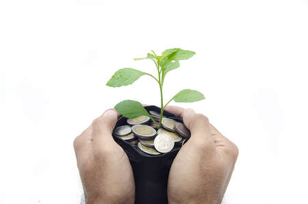 mans hands protecting the money plant photo