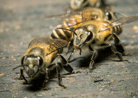 Macro shot of bees swarming on wood. Imagens