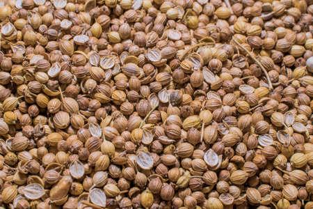 Texture of the coriander grains photo