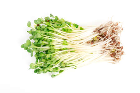 kaiware sprout, japanese vegetable or watercress, its green and fresh on white background photo