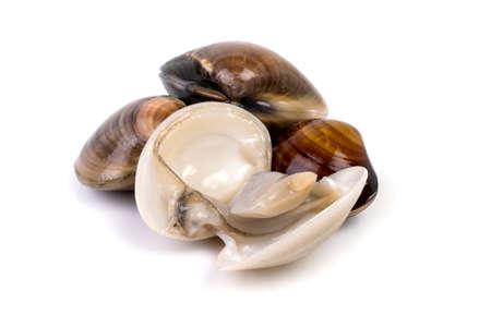 verse tweekleppige schelpdieren op witte achtergrond Stockfoto
