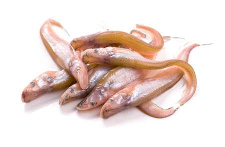 sheatfish: Sheatfish aislado en fondo blanco