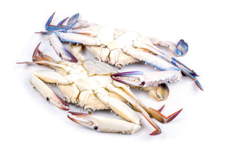 Blue crab isolated on white background photo