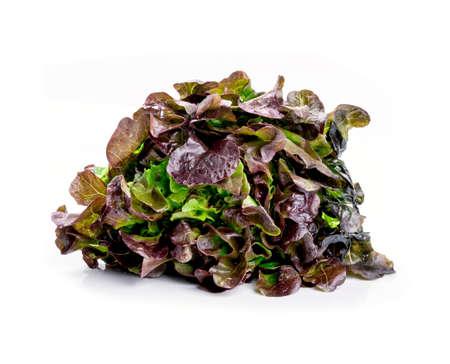 frilly: Oak Leaf lettuce on white background