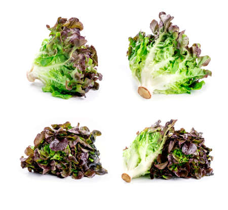 lettuces: Oak Leaf lettuces on white background