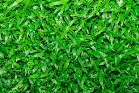 grass plot: Natural background - green grass texture