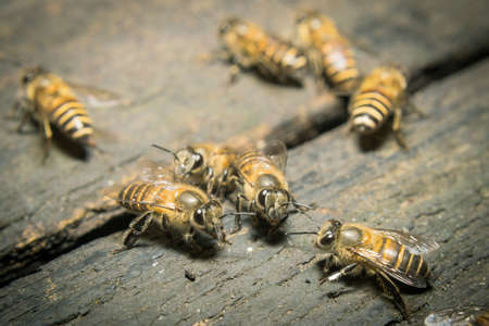 Hive: Macro shot of bees swarming on wood. Stock Photo