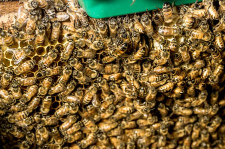 kept: Macro shot of bees are kept in crates. Stock Photo