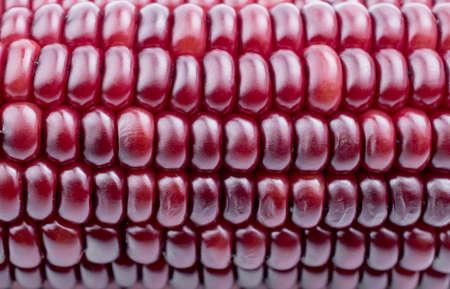 corn kernel: purple corn on a white background Stock Photo