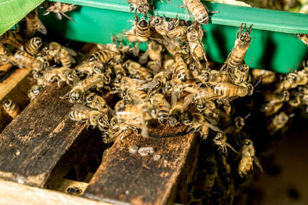 joint effort: Macro shot of bees are kept in crates. Stock Photo