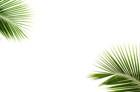 Kokosnoot bladeren op witte achtergrond Stockfoto