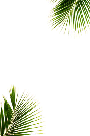 Coconut leaves on white background Stock Photo
