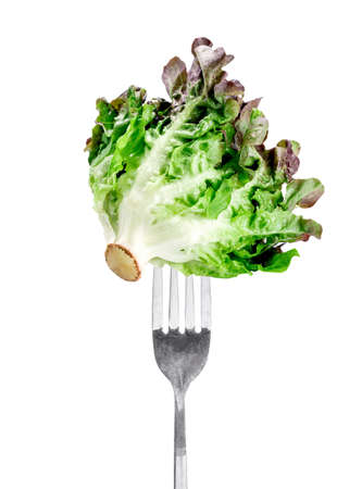 frilly: Oak Leaf lettuce on fork isolated on white background Stock Photo