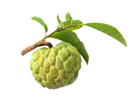annonaceae: Fresh Custard Apple with leaf isolated on white background Stock Photo