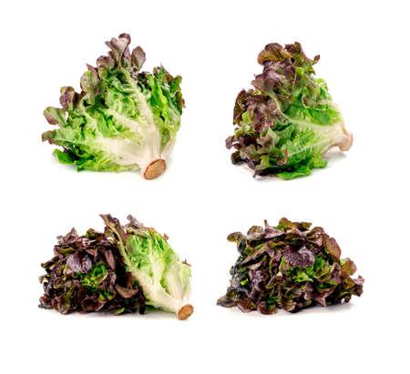 Oak Leaf lettuce on white background