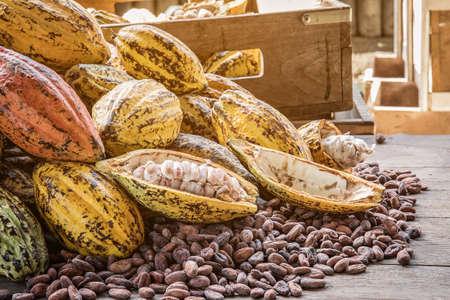 カカオ豆やココア フルーツの新鮮なココアの鞘は公開のココア種は、バック グラウンドでココア植物をカットしました。 写真素材