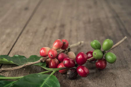 Coffee beans with real coffee fruits and leaves on wooden table close up. Stock Photo