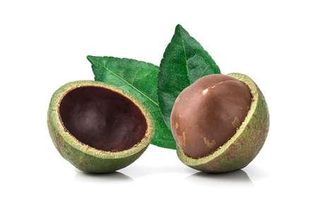 macadamia nuts on white background.