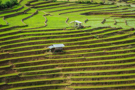 Terraced Paddy Field in Mae-Jam Village , Chiang Mai Province , Thailand 免版税图像