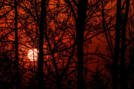 The silhouette of the branches at sunset. Standard-Bild