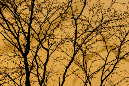 The silhouette of the branches at sunset. 写真素材